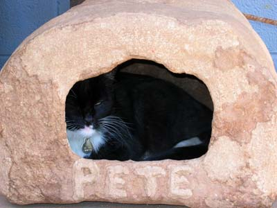 picture of cathouse