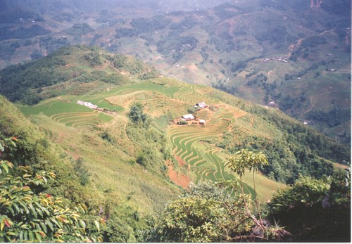 Pic of rice terraces near Sapa